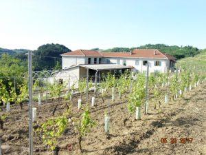 013- Azienda agricola in vendita – Cassinasco