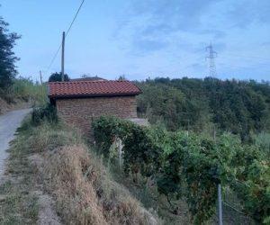 083 – Vigneto in vendita a Cassinasco