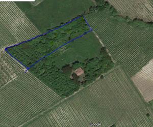 090 – Land for sale in San Marzano Oliveto